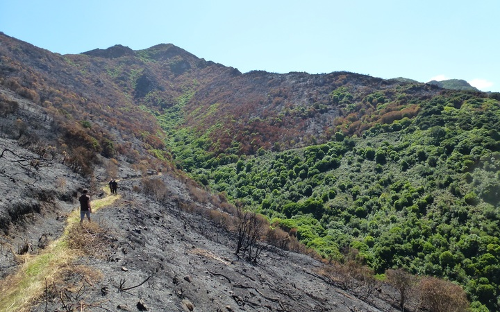 Port Hills fire damage: Ohinetahi Bush Reserve