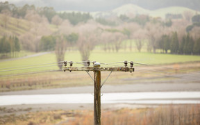 Power lines in the Hawke's Bay area