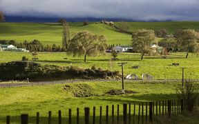 Farm, South Island, New Zealand.