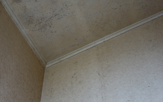 Mould in Diane Taqvi's house.