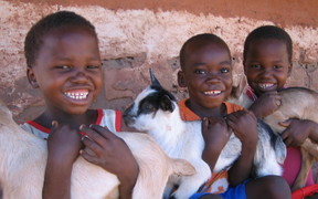 Three goat kids with children in Luangwa-Zambia