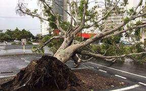 Wind and rain from Cyclone Debbie tore this tree from the ground in Mackay.