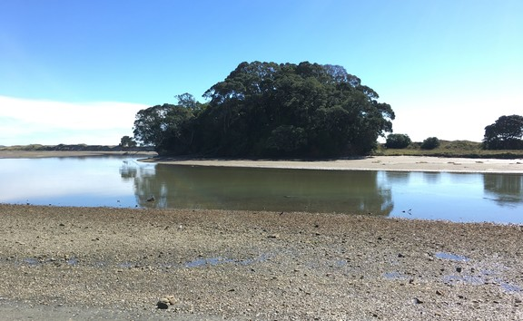 The Waiotahi pipi beds on the far bank of the estuary.