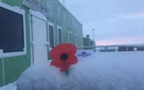 A poppy in the snow at Scott Base