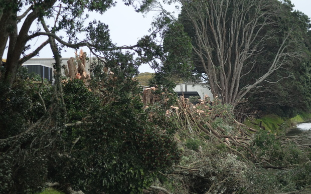 One Waitara resident thought it looked a bit stark without the trees.