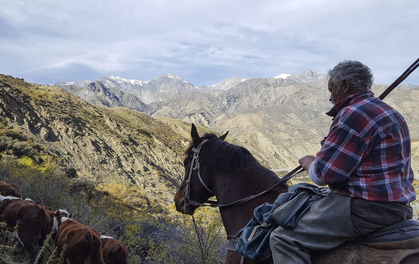 The musters oldest team member, Rick Denton, mustering cattle on Muzzle Station.