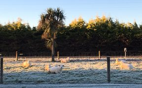 A frosty morning in the Waikato.
