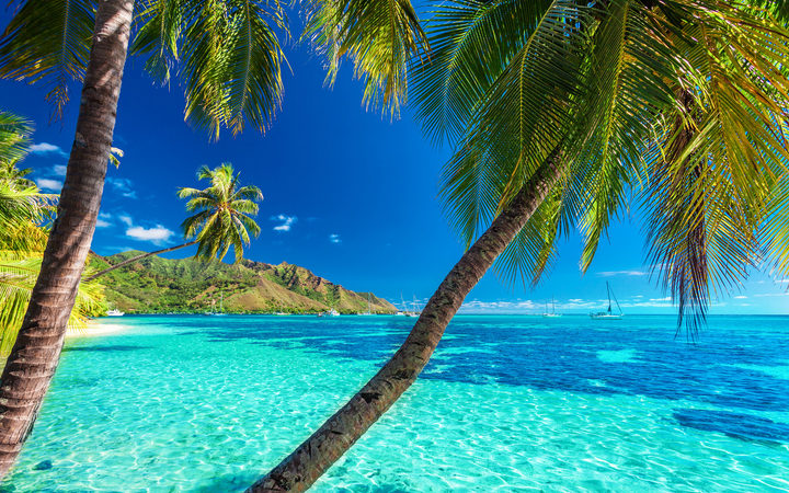 A tropical beach scene on Moorea in French Polynesia