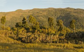 The proposed mine site at Mt Te Kuha near Westport Photo Neil Silverwood