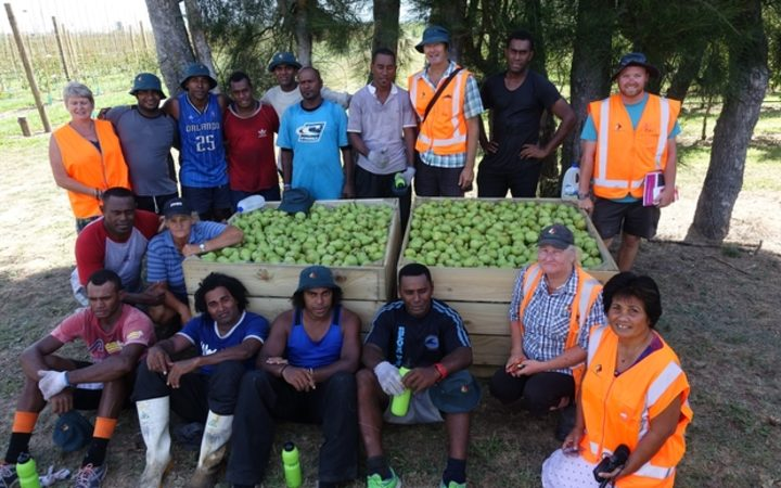 Recognised Seasonal Employers scheme workers from Fiji taken a short break from picking pears in a Twyford orchard owned by RJ Flowers.