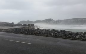Driftwood and big waves are being washed up at Lyall Bay.