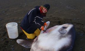Marianne Nyegaard and the new species of sunfish