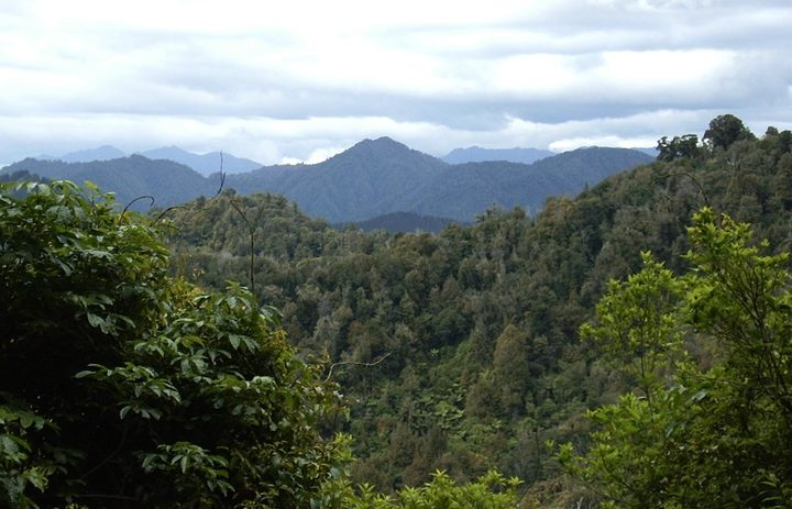Deep In Te Urewera National Park, looking towards East Cape