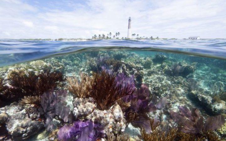 Insuring nature against damage | RNZ