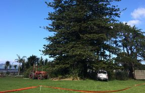 A stoush has erupted over a 25-metre Norfolk pine at Snells Beach north of Auckland.