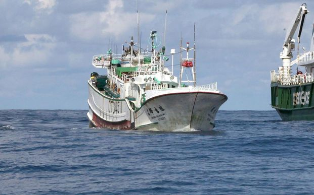 A Palauan law enforcement vessel escorting a Taiwanese long line fishing vessel suspected of illegally shark finning in 2011.