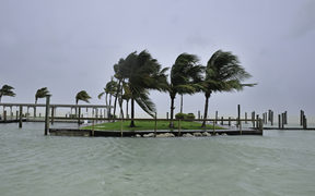 Palm trees blow in the high wind in the Florida Keys.