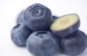 Plant and Food Research is trying to breed a hybrid superfruit that combines the taste and growing characteristics of blueberries with the colourful flesh of bilberries.