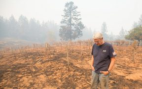 Property owner Chris Schrobilgen stands in his neighbor's burned grape vineyard in Calistoga, California.