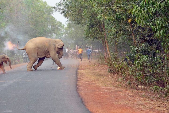 The image, which RNZ has cropped, won an award for highlighting humna-elephant conflict.