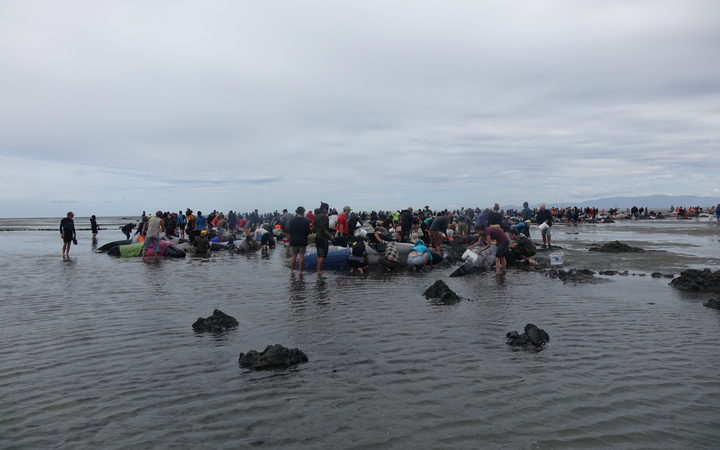 Hundreds of people arrived at Farewell Spit last February to help in what was mainland New Zealand's biggest whale stranding since records began.
