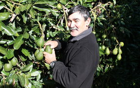 Greg Prince now grows avocadoes in the Bay of Plenty