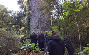 Te Kawerau a Maki announced a rahui to discourage people from visiting the Waitakere Ranges in a bid to stop the spread of kauri dieback.Te Kawerau a Maki announced a rahui to discourage people from visiting the Waitakere Ranges in a bid to stop the spread of kauri dieback.