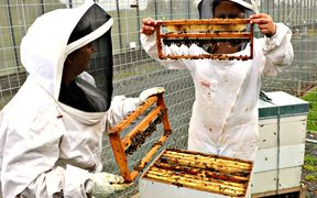 ARWCF women prisoners inspect the beehives on-site