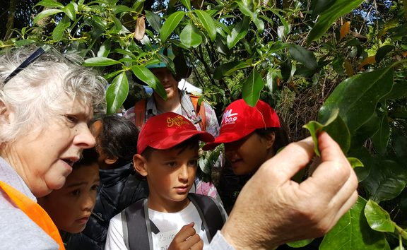 Pam Cromarty and students identify a Coprosma plant in a Stokes Valley reserve.