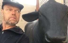 Bruce goes eye to eye with a replica bull in the town of Bulls.