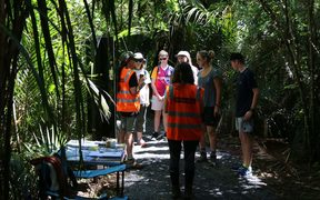 Auckland Council staff speak with walkers about Kauri dieback on Kitekite Falls trail.