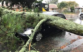 The driver of this car in Otahuhu had a lucky escape when a large pine tree fell on her vehicle.
