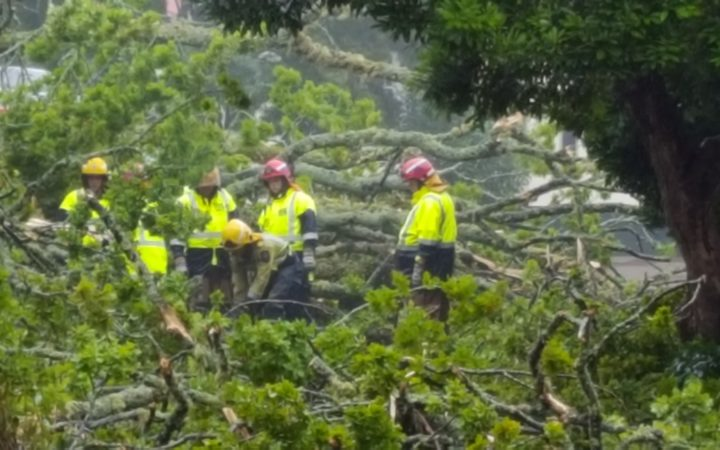 Crews work to free a person trapped in a car in Rotorua when a tree fell on the vehicle