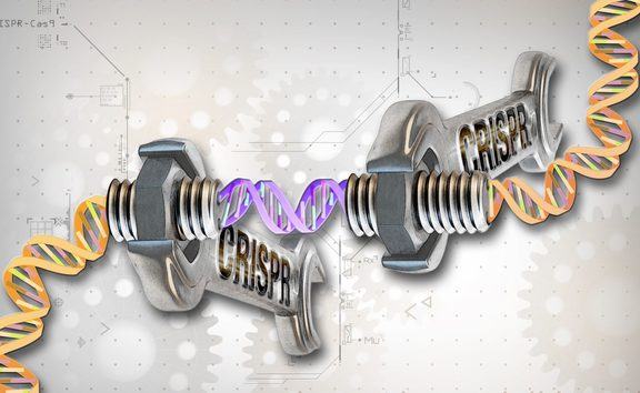 The CRISPR sequences are a crucial component of the immune systems of bacteria.