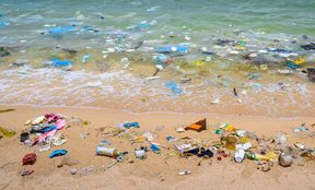 Plastics wash ashore on the tide.