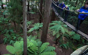 Walkway 1 -- Rotorua's Redwood Treewalk allows visitors to experience the forest 12 metres up.