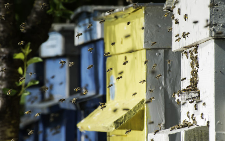 European Union nations back ban on insecticides to protect bees