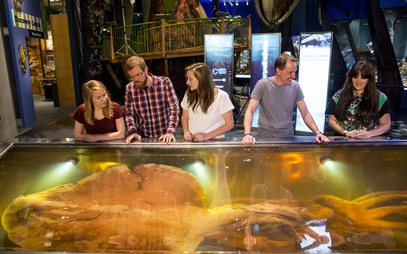 Visitors view Te Papa's colossal squid