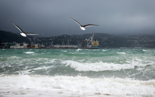 Seagulls making the most of the strong winds blowing into Oriental Parade.