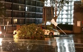 A tree fallen over a car on Cook St, outside the RNZ office, after a major storm overnight.