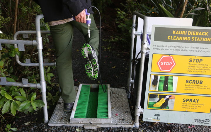 Kauri dieback: Need for better cleaning stations for Waiheke visitors