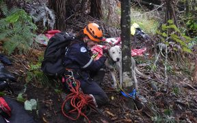 SPCA rescuers save dogs stranded in a remote part of the Hawke's Bay.