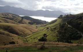 View across Hereweka Farm towards Otago Harbour. Once covered in forest, Otago Peninsula is now mostly farmland.