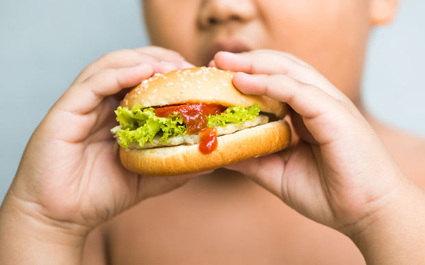 An obese child eats a hamburger