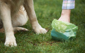 Dog owner clearing droppings with plastic bag.