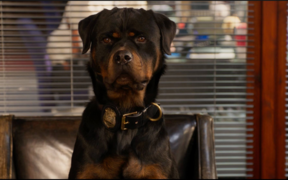 The scene being questioned involves lead character, police dog Max.