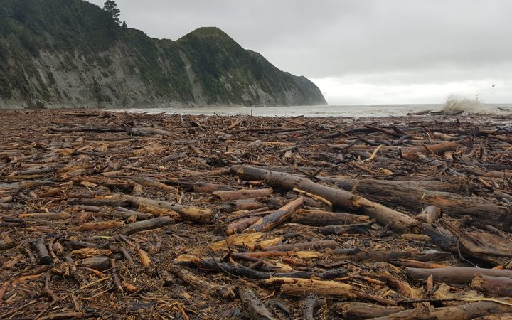 Logs wash up on Tologa Bay beach after flooding in the area.