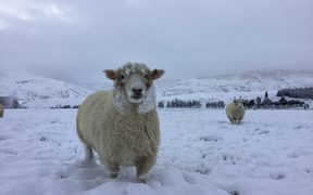 A woolly coat is an advantage today in Fairlight, Southland. Snow in Southland 6 June 2018