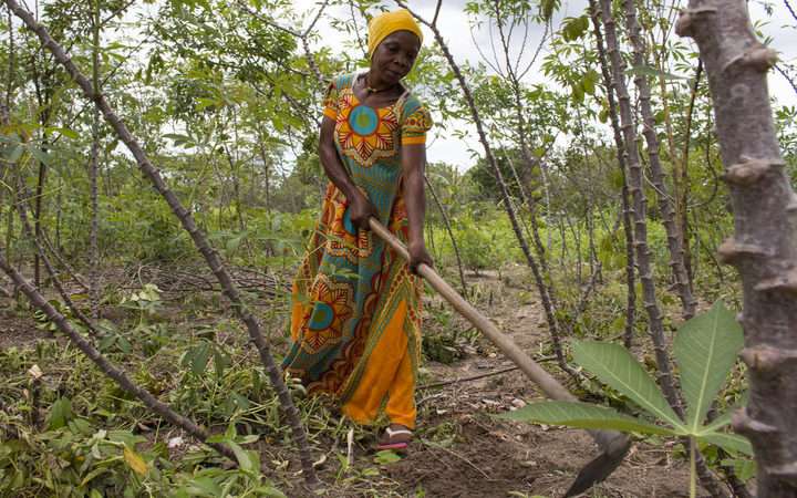 Woman works in her cassava field in Mkuranga, Tanzania.