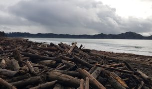 Slash debris after flooding in Tolaga Bay.